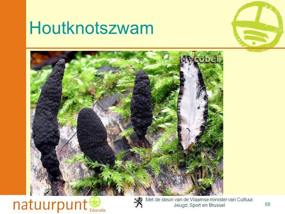 Met de steun van de Vlaamse minister van Cultuur, Jeugd, Sport en Brussel 68 Houtknotszwam
