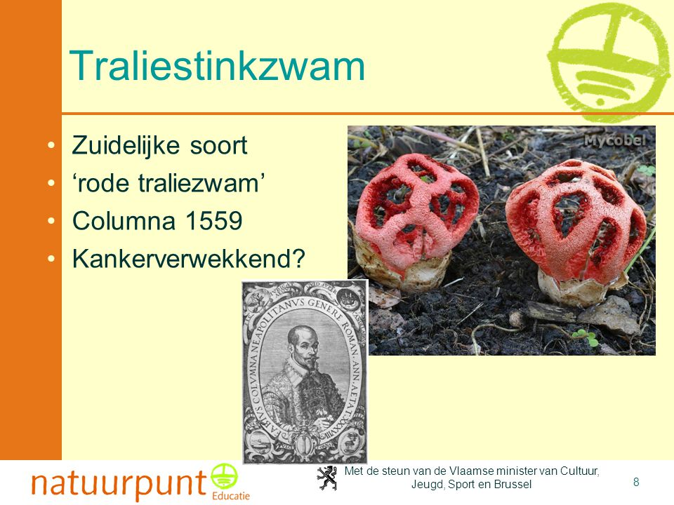 Met de steun van de Vlaamse minister van Cultuur, Jeugd, Sport en Brussel 8 Traliestinkzwam Zuidelijke soort 'rode traliezwam' Columna 1559 Kankerverwekkend?