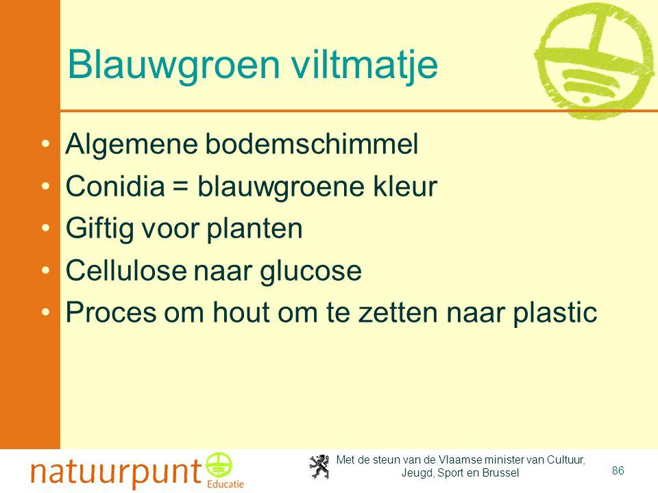 Met de steun van de Vlaamse minister van Cultuur, Jeugd, Sport en Brussel 86 Blauwgroen viltmatje Algemene bodemschimmel Conidia = blauwgroene kleur G