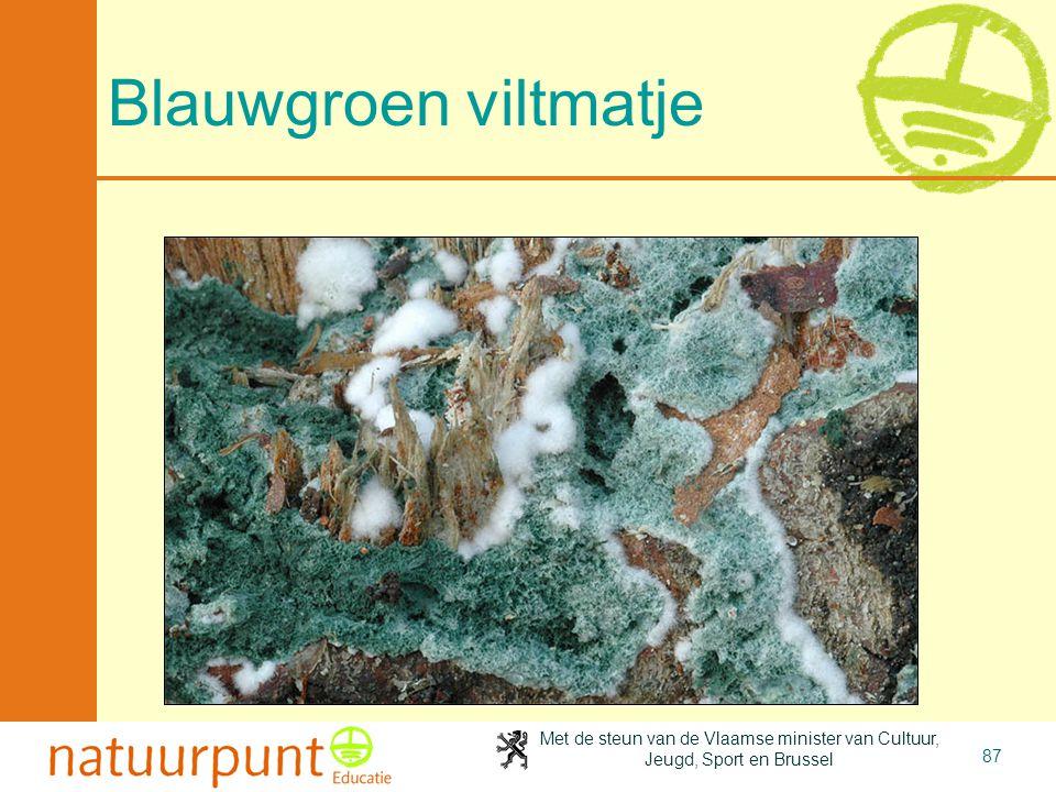 Met de steun van de Vlaamse minister van Cultuur, Jeugd, Sport en Brussel 87 Blauwgroen viltmatje