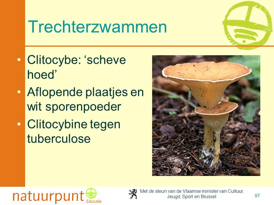 Met de steun van de Vlaamse minister van Cultuur, Jeugd, Sport en Brussel 97 Trechterzwammen Clitocybe: 'scheve hoed' Aflopende plaatjes en wit sporenpoeder Clitocybine tegen tuberculose