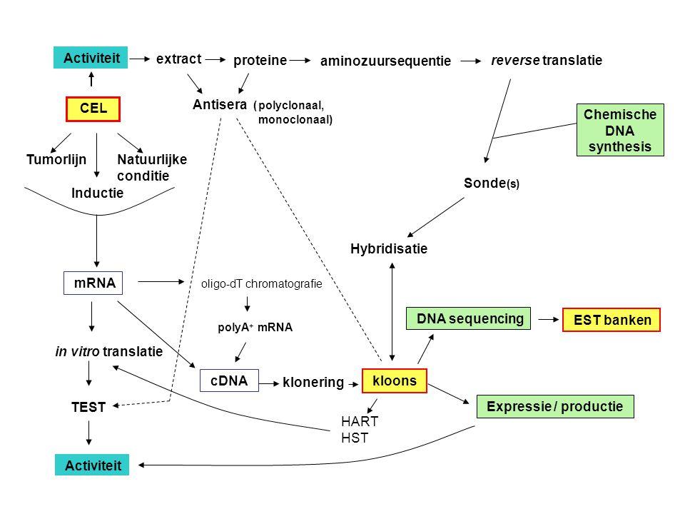 Activiteit aminozuursequentie CEL Antisera (polyclonaal, monoclonaal) reverse translatie proteine extract Sonde (s) Tumorlijn Inductie Natuurlijke con