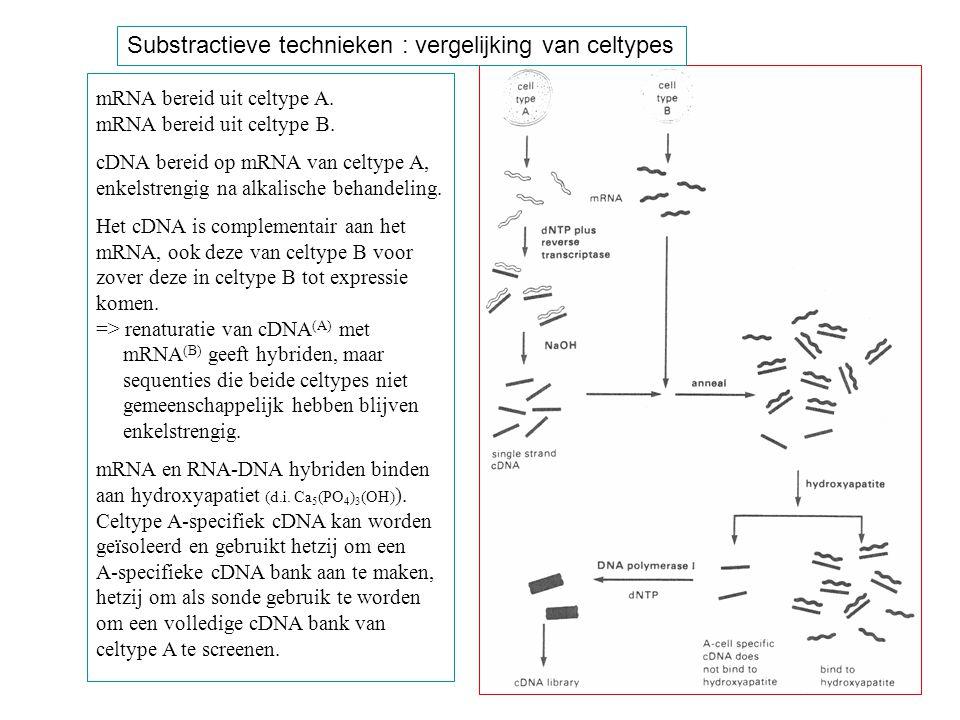 mRNA bereid uit celtype A. mRNA bereid uit celtype B. cDNA bereid op mRNA van celtype A, enkelstrengig na alkalische behandeling. Het cDNA is compleme