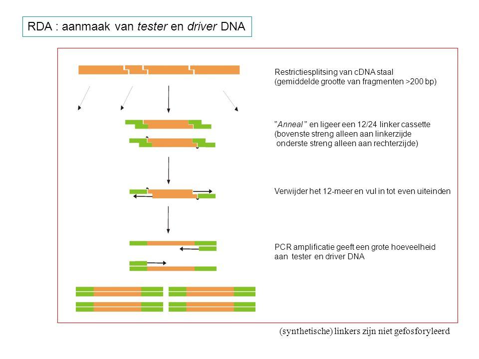 Restrictiesplitsing van cDNA staal (gemiddelde grootte van fragmenten >200 bp)