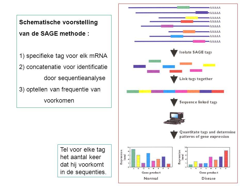Tel voor elke tag het aantal keer dat hij voorkomt in de sequenties. Schematische voorstelling van de SAGE methode : 1) specifieke tag voor elk mRNA 2