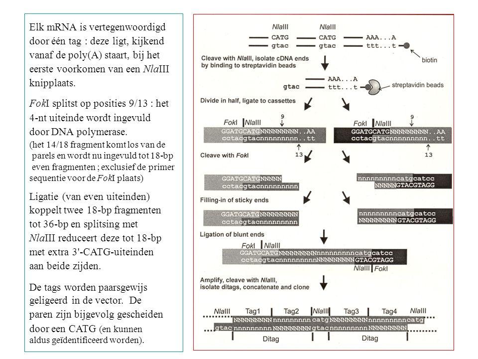 Elk mRNA is vertegenwoordigd door één tag : deze ligt, kijkend vanaf de poly(A) staart, bij het eerste voorkomen van een NlaIII knipplaats. FokI split