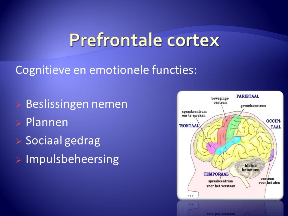 Cognitieve en emotionele functies:  Beslissingen nemen  Plannen  Sociaal gedrag  Impulsbeheersing