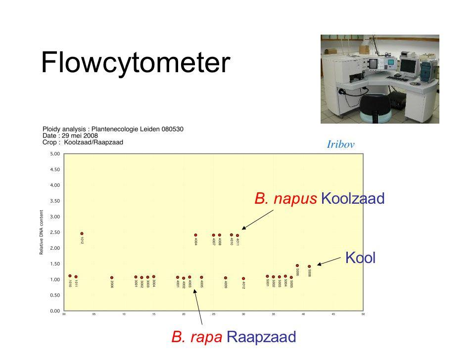 Flowcytometer Kool B. rapa Raapzaad B. napus Koolzaad