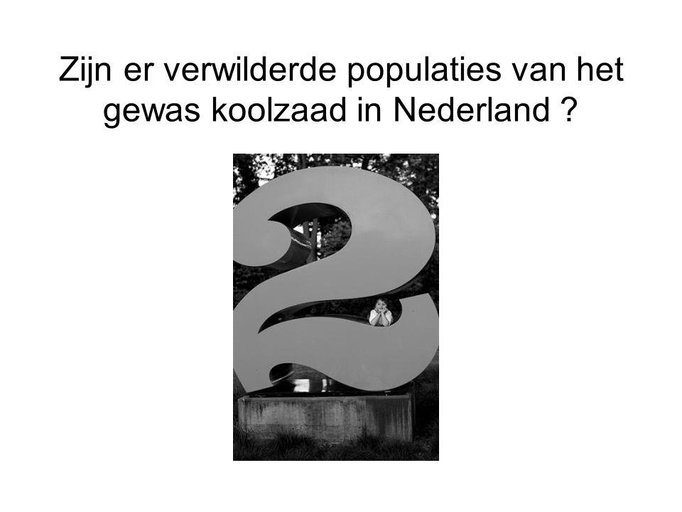 Zijn er verwilderde populaties van het gewas koolzaad in Nederland ?