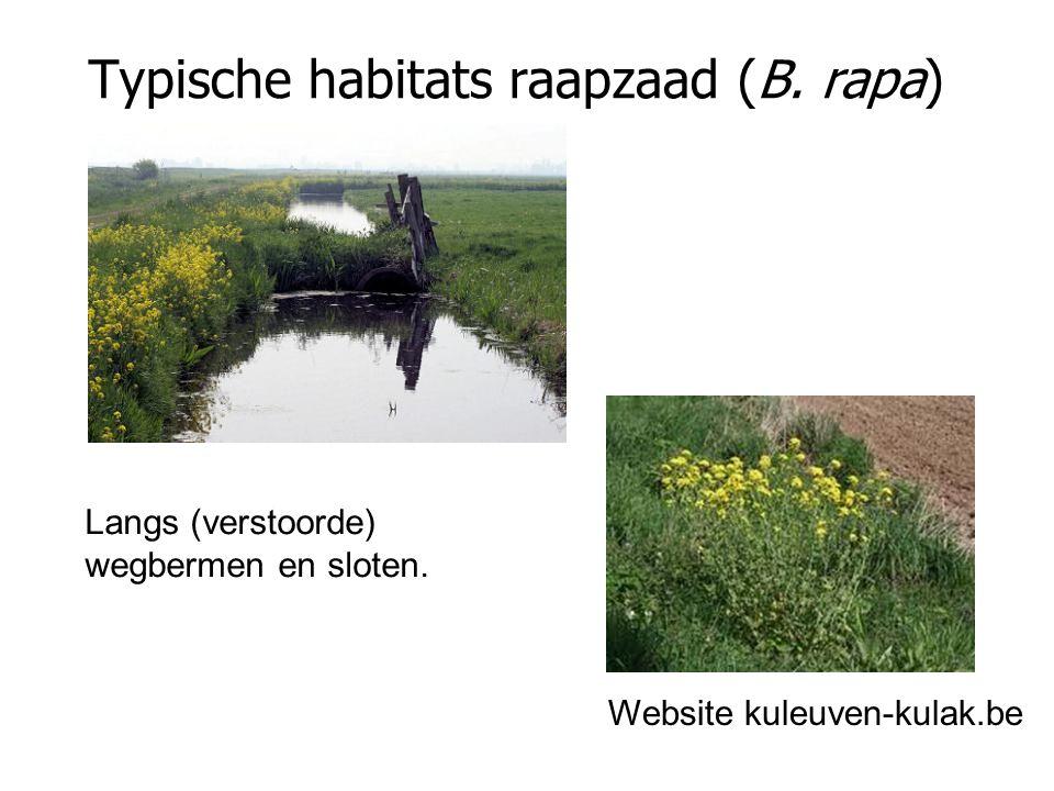 Typische habitats raapzaad (B. rapa) Website kuleuven-kulak.be Langs (verstoorde) wegbermen en sloten.