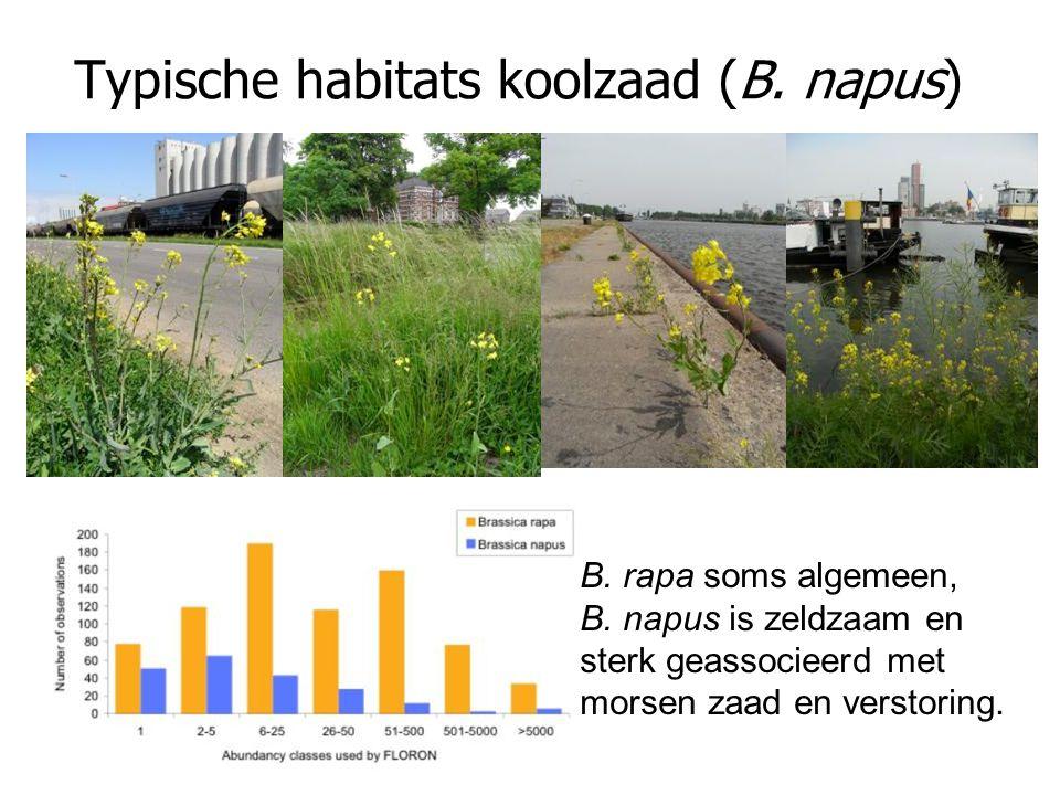 Typische habitats koolzaad (B. napus) B. rapa soms algemeen, B. napus is zeldzaam en sterk geassocieerd met morsen zaad en verstoring.