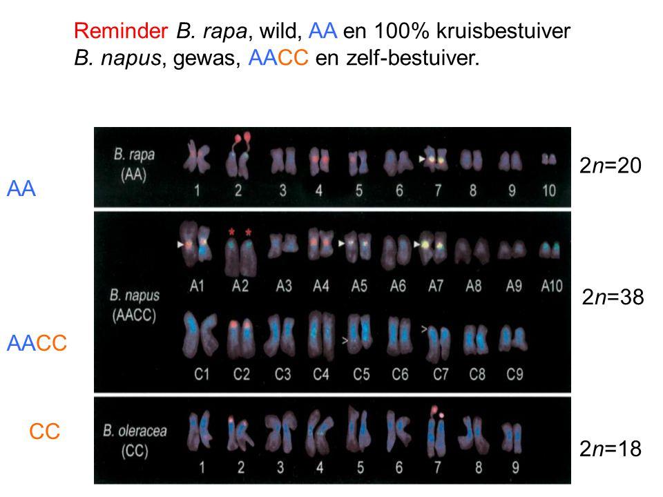 Reminder B. rapa, wild, AA en 100% kruisbestuiver B. napus, gewas, AACC en zelf-bestuiver. 2n=20 2n=18 2n=38 AA AACC CC