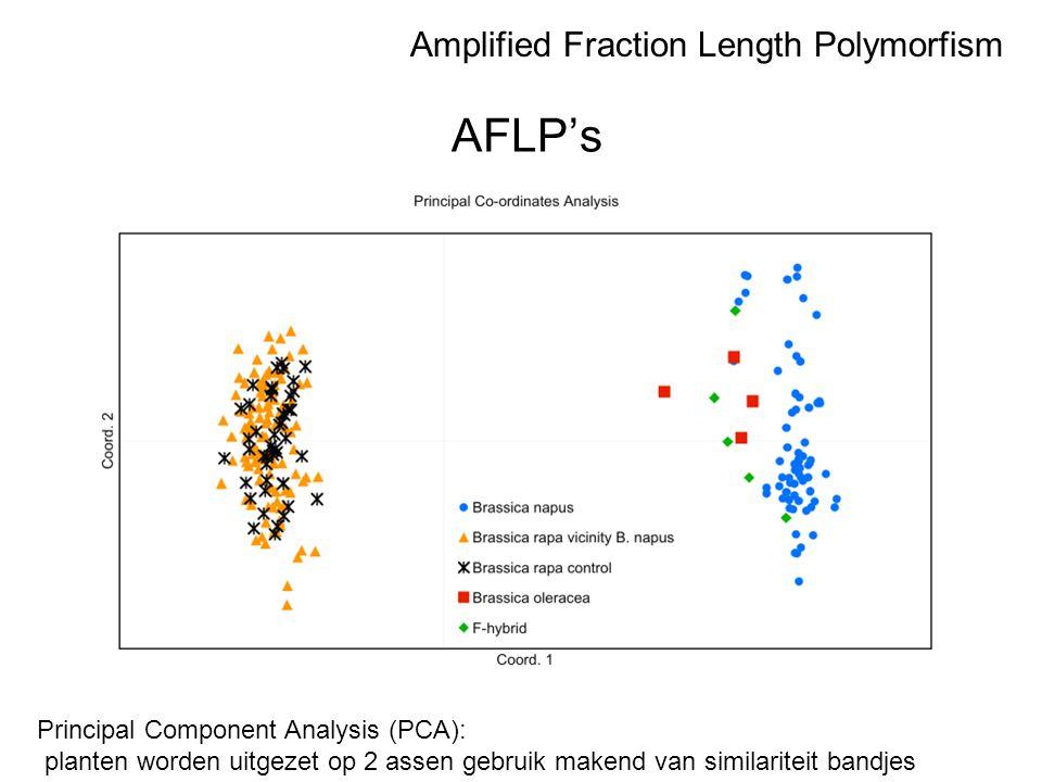 AFLP's Principal Component Analysis (PCA): planten worden uitgezet op 2 assen gebruik makend van similariteit bandjes Amplified Fraction Length Polymo