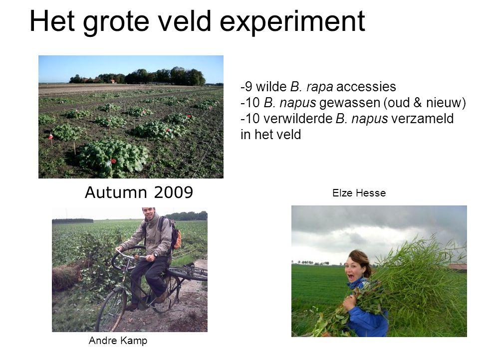 Autumn 2009 Het grote veld experiment -9 wilde B. rapa accessies -10 B. napus gewassen (oud & nieuw) -10 verwilderde B. napus verzameld in het veld An
