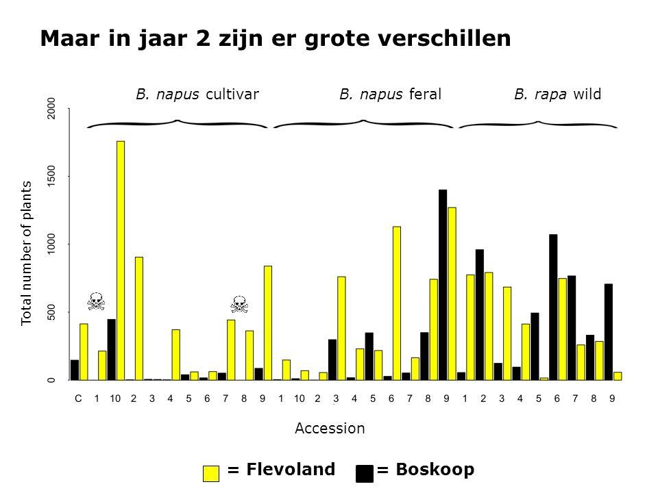 Maar in jaar 2 zijn er grote verschillen B. napus cultivarB. napus feralB. rapa wild Accession Total number of plants = Boskoop= Flevoland