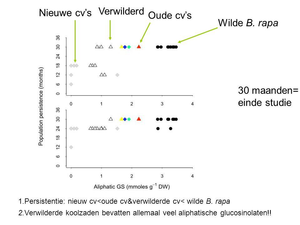 Nieuwe cv's Verwilderd Oude cv's Wilde B. rapa 1.Persistentie: nieuw cv<oude cv&verwilderde cv< wilde B. rapa 2.Verwilderde koolzaden bevatten allemaa