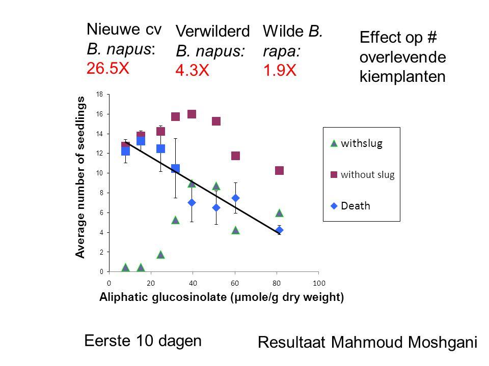 Nieuwe cv B. napus: 26.5X Verwilderd B. napus: 4.3X Wilde B. rapa: 1.9X Eerste 10 dagen Resultaat Mahmoud Moshgani Effect op # overlevende kiemplanten