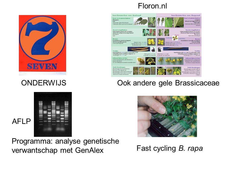 Programma: analyse genetische verwantschap met GenAlex Floron.nl Fast cycling B. rapa ONDERWIJSOok andere gele Brassicaceae AFLP