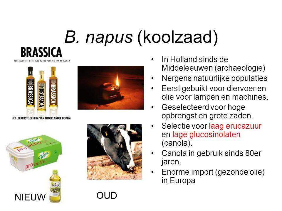 B. napus (koolzaad) In Holland sinds de Middeleeuwen (archaeologie) Nergens natuurlijke populaties Eerst gebuikt voor diervoer en olie voor lampen en
