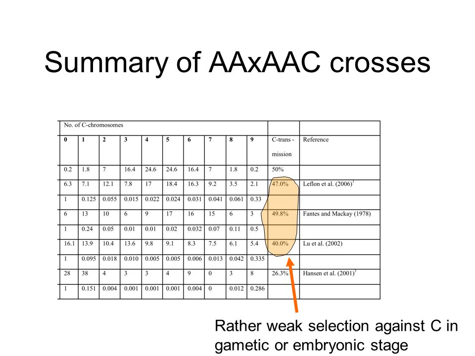 Summary of AAxAAC crosses Rather weak selection against C in gametic or embryonic stage