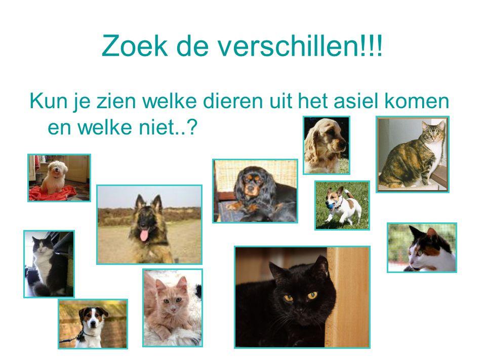 Zoek de verschillen!!! Kun je zien welke dieren uit het asiel komen en welke niet..?