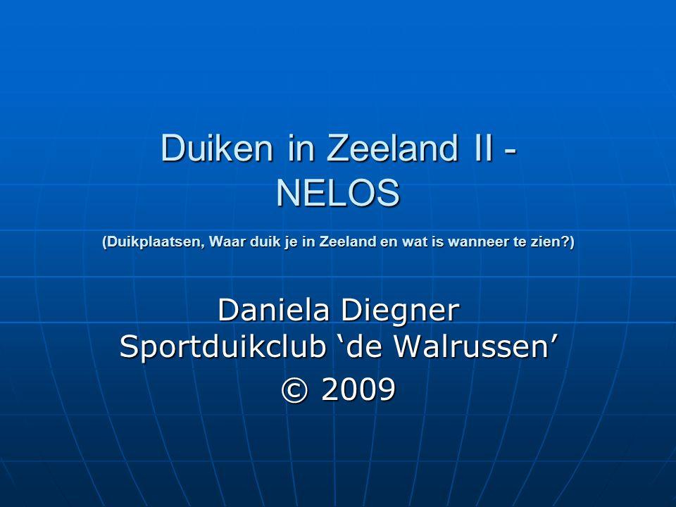 Duiken in Zeeland II - NELOS (Duikplaatsen, Waar duik je in Zeeland en wat is wanneer te zien?) Daniela Diegner Sportduikclub 'de Walrussen' © 2009