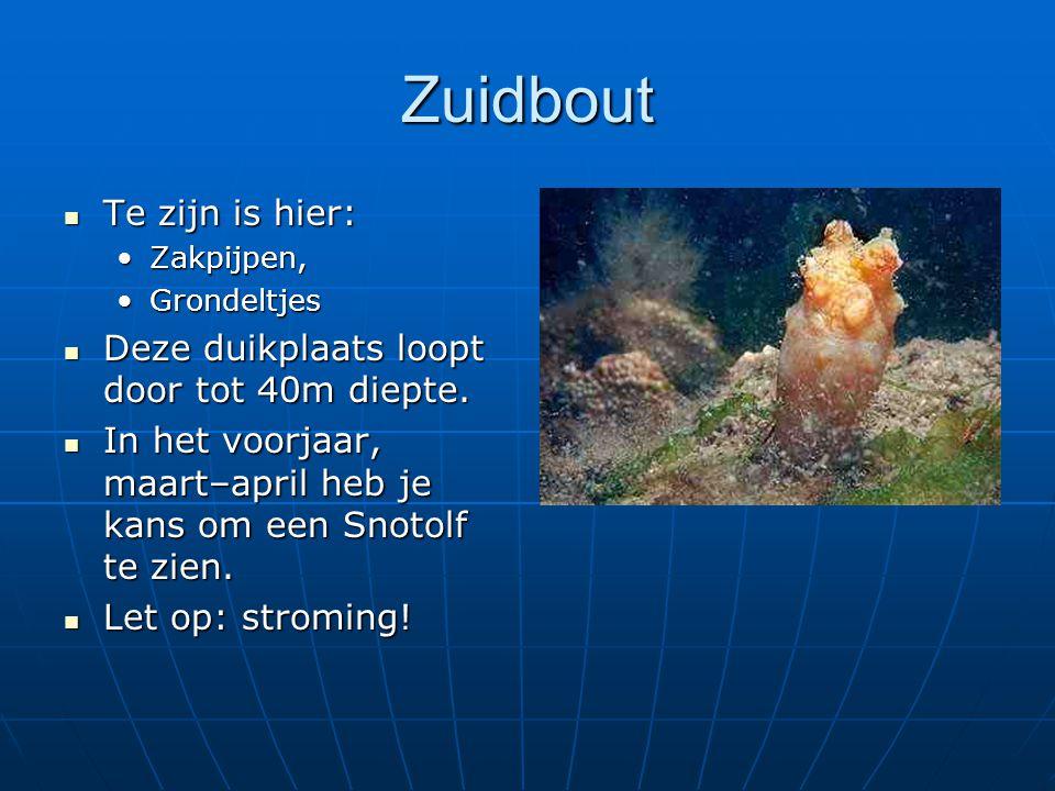 Zuidbout Te zijn is hier: Te zijn is hier: Zakpijpen,Zakpijpen, GrondeltjesGrondeltjes Deze duikplaats loopt door tot 40m diepte. Deze duikplaats loop