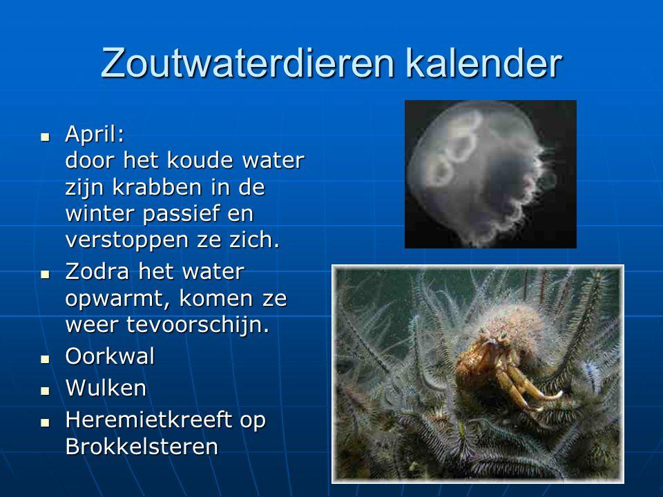 Zoutwaterdieren kalender April: door het koude water zijn krabben in de winter passief en verstoppen ze zich. April: door het koude water zijn krabben