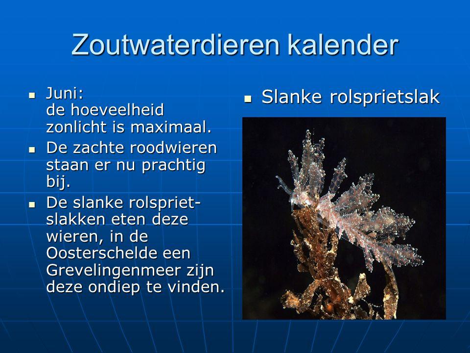 Zoutwaterdieren kalender Juni: de hoeveelheid zonlicht is maximaal. Juni: de hoeveelheid zonlicht is maximaal. De zachte roodwieren staan er nu pracht