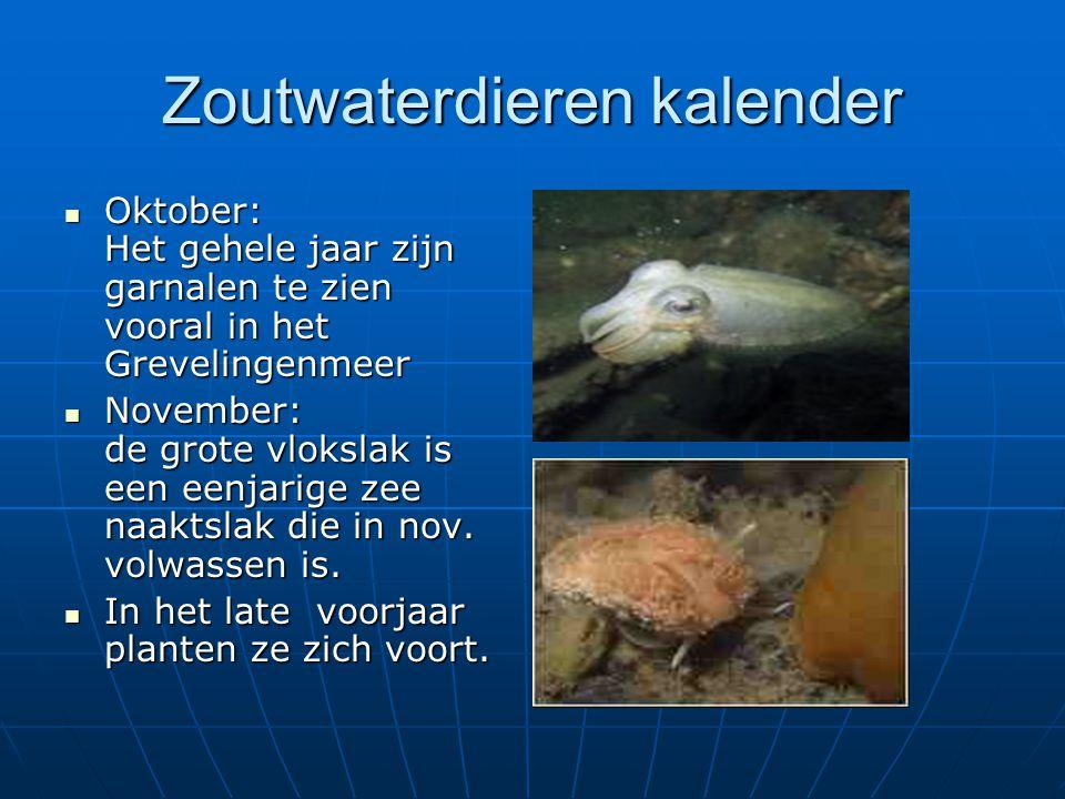Zoutwaterdieren kalender Oktober: Het gehele jaar zijn garnalen te zien vooral in het Grevelingenmeer Oktober: Het gehele jaar zijn garnalen te zien v