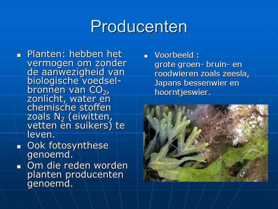 Producenten Planten: hebben het vermogen om zonder de aanwezigheid van biologische voedsel- bronnen van CO 2, zonlicht, water en chemische stoffen zoa
