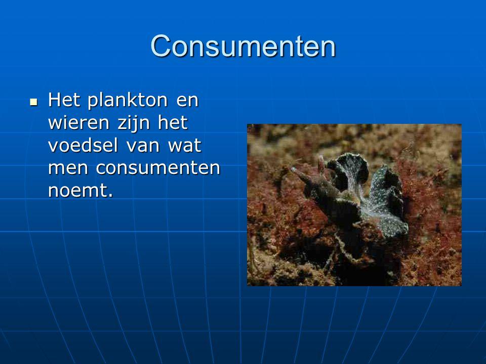 Consumenten Het plankton en wieren zijn het voedsel van wat men consumenten noemt. Het plankton en wieren zijn het voedsel van wat men consumenten noe