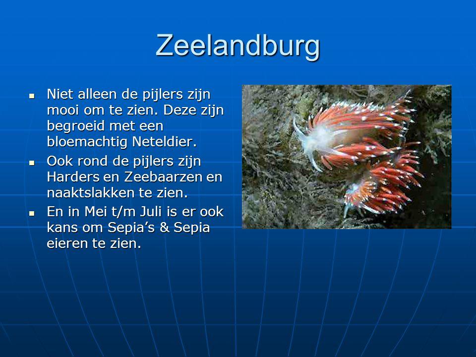 Zeelandburg Niet alleen de pijlers zijn mooi om te zien. Deze zijn begroeid met een bloemachtig Neteldier. Niet alleen de pijlers zijn mooi om te zien