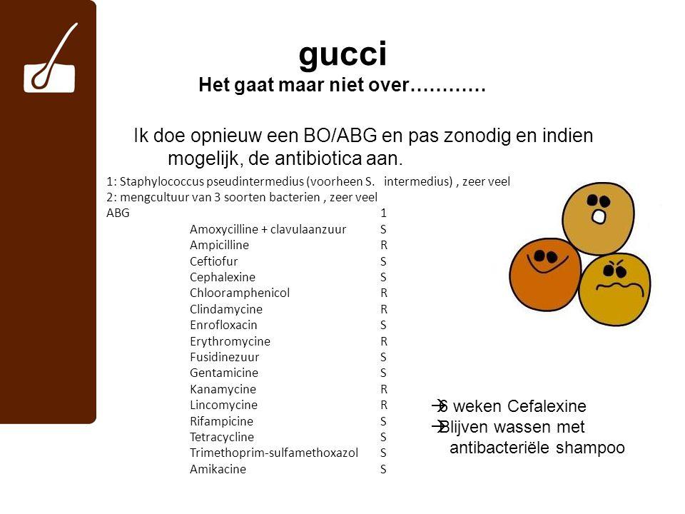 gucci Het gaat maar niet over………… Ik doe opnieuw een BO/ABG en pas zonodig en indien mogelijk, de antibiotica aan. 1: Staphylococcus pseudintermedius
