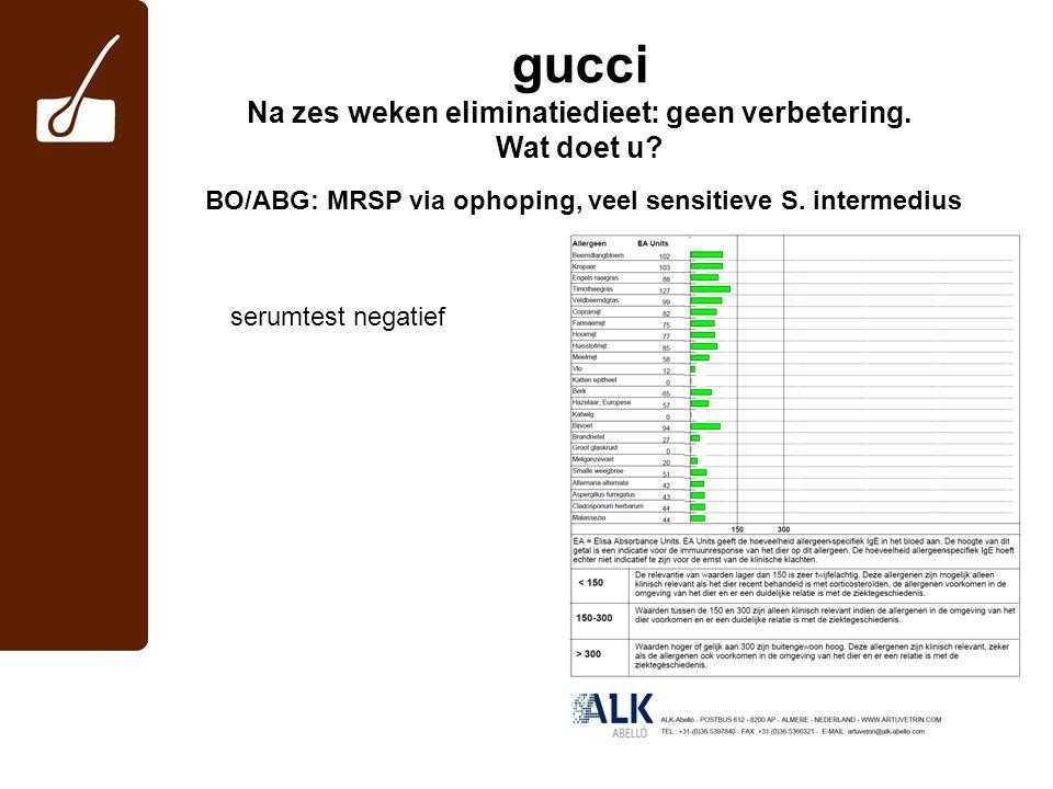gucci Na zes weken eliminatiedieet: geen verbetering. Wat doet u? BO/ABG: MRSP via ophoping, veel sensitieve S. intermedius serumtest negatief