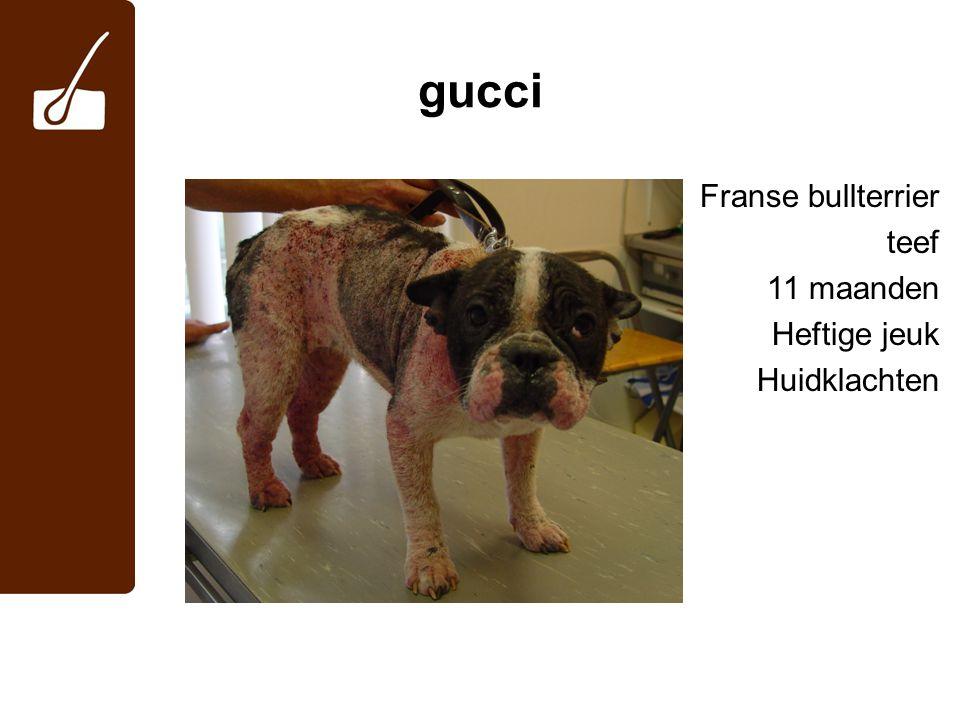 gucci -microscopisch onderzoek huidafkrabsels: negatief -cytologisch onderzoek afdrukpreparaat: -(intracellulaire) coccen, geen gisten -behandeling: -Stronghold® -cefalosporinen