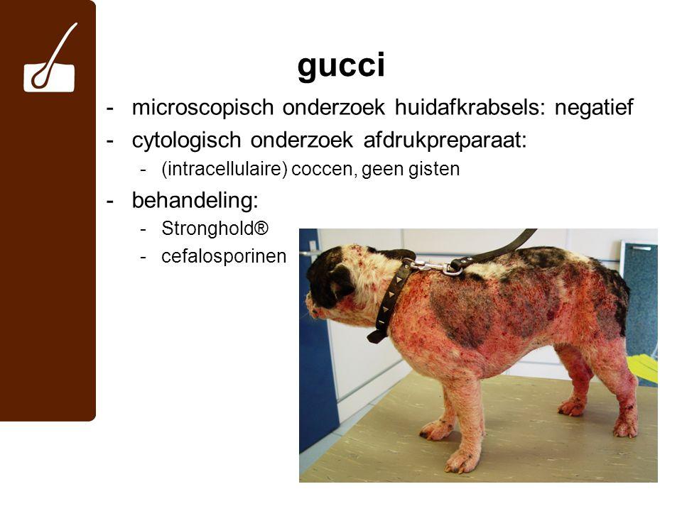 gucci -microscopisch onderzoek huidafkrabsels: negatief -cytologisch onderzoek afdrukpreparaat: -(intracellulaire) coccen, geen gisten -behandeling: -