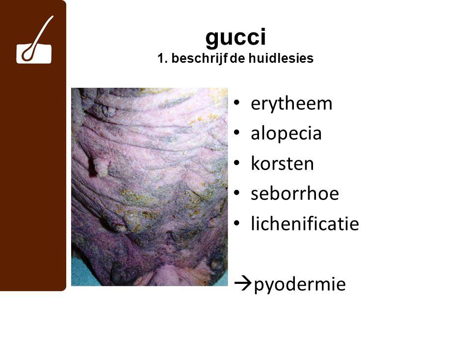 gucci 2.antibiotica hebben niet geholpen, wat nu.