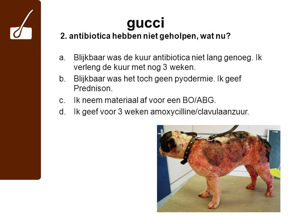 gucci 2. antibiotica hebben niet geholpen, wat nu? a.Blijkbaar was de kuur antibiotica niet lang genoeg. Ik verleng de kuur met nog 3 weken. b.Blijkba