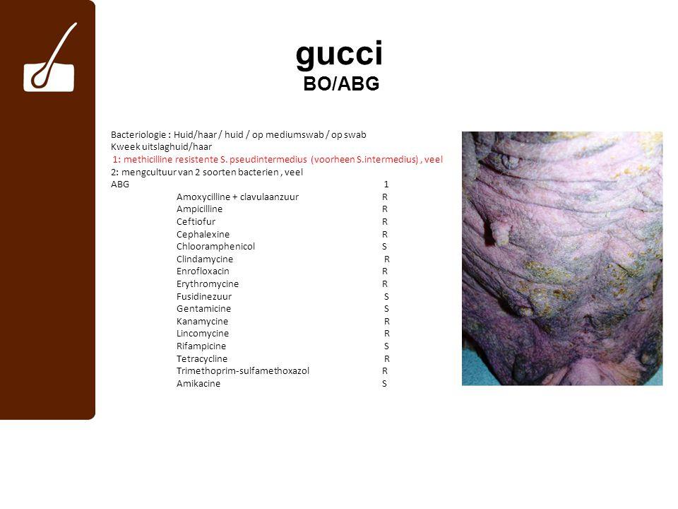 gucci BO/ABG Bacteriologie : Huid/haar / huid / op mediumswab / op swab Kweek uitslaghuid/haar 1: methicilline resistente S. pseudintermedius (voorhee