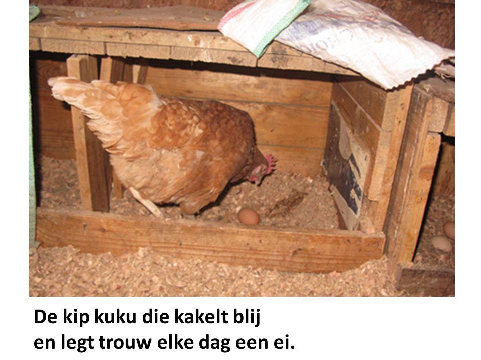 De kip kuku die kakelt blij en legt trouw elke dag een ei.