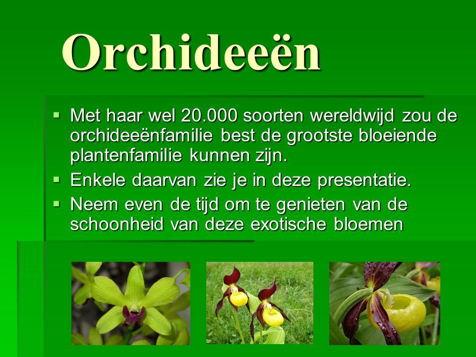 Orchideeën  Met haar wel 20.000 soorten wereldwijd zou de orchideeënfamilie best de grootste bloeiende plantenfamilie kunnen zijn.  Enkele daarvan z