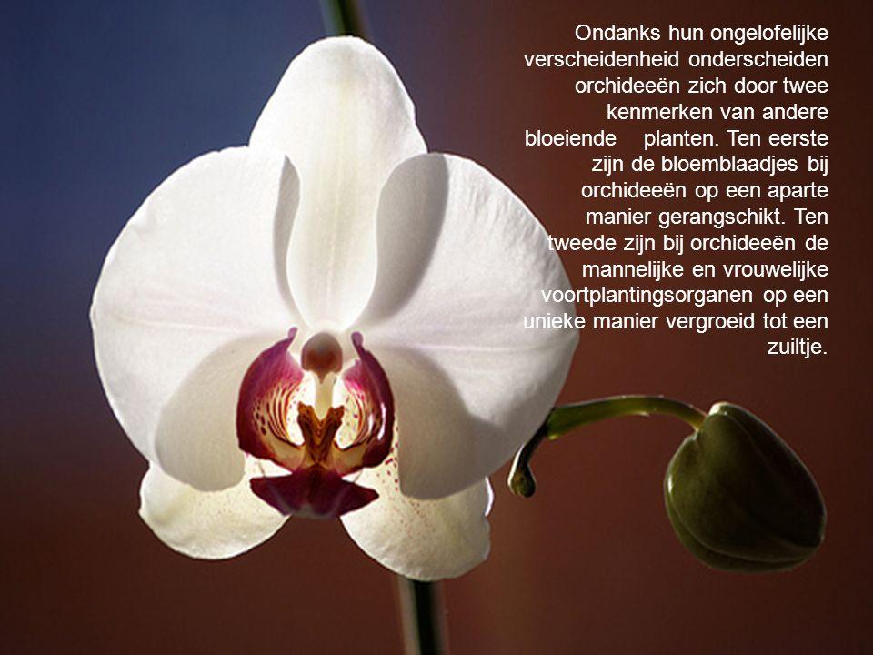 Ondanks hun ongelofelijke verscheidenheid onderscheiden orchideeën zich door twee kenmerken van andere bloeiende planten. Ten eerste zijn de bloemblaa