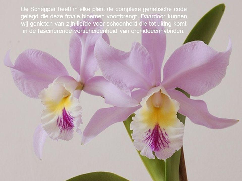 De Schepper heeft in elke plant de complexe genetische code gelegd die deze fraaie bloemen voortbrengt. Daardoor kunnen wij genieten van zijn liefde v