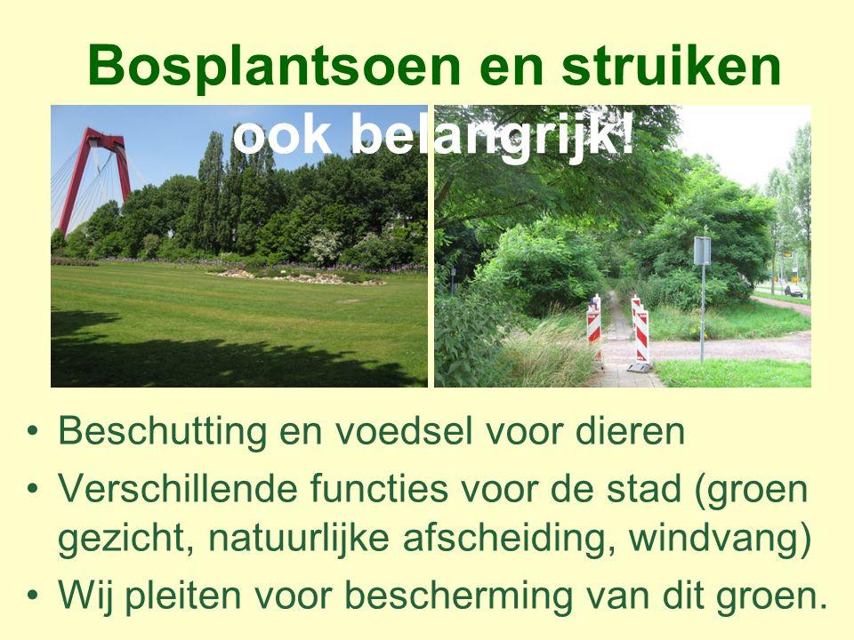 Laat Rotterdamse bomen oud worden.