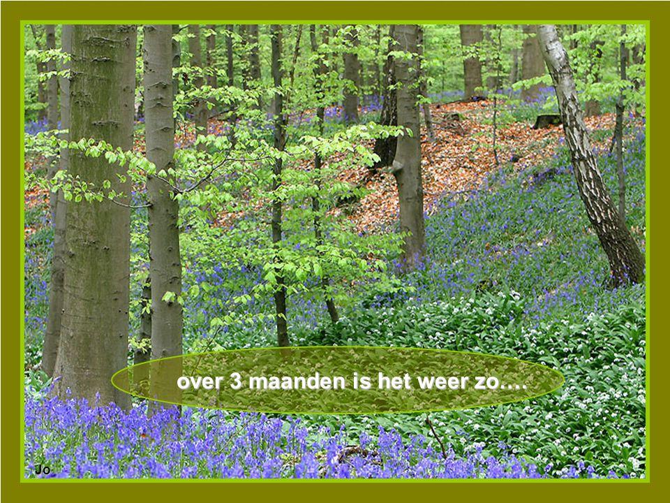 Heerlijk, zo'n wandeling in het bos….