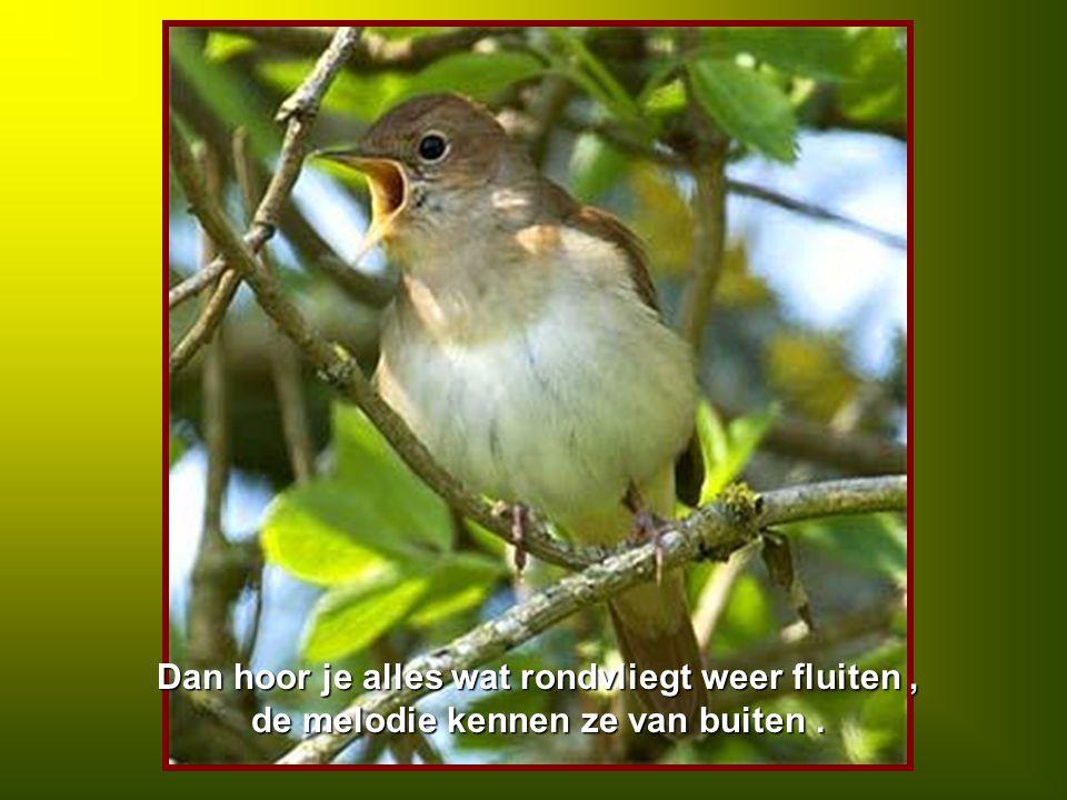 Dan hoor je alles wat rondvliegt weer fluiten, de melodie kennen ze van buiten.