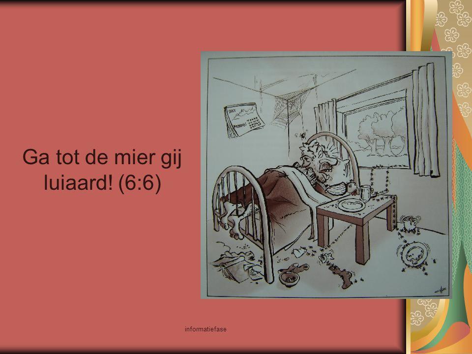 informatiefase Ga tot de mier gij luiaard! (6:6)