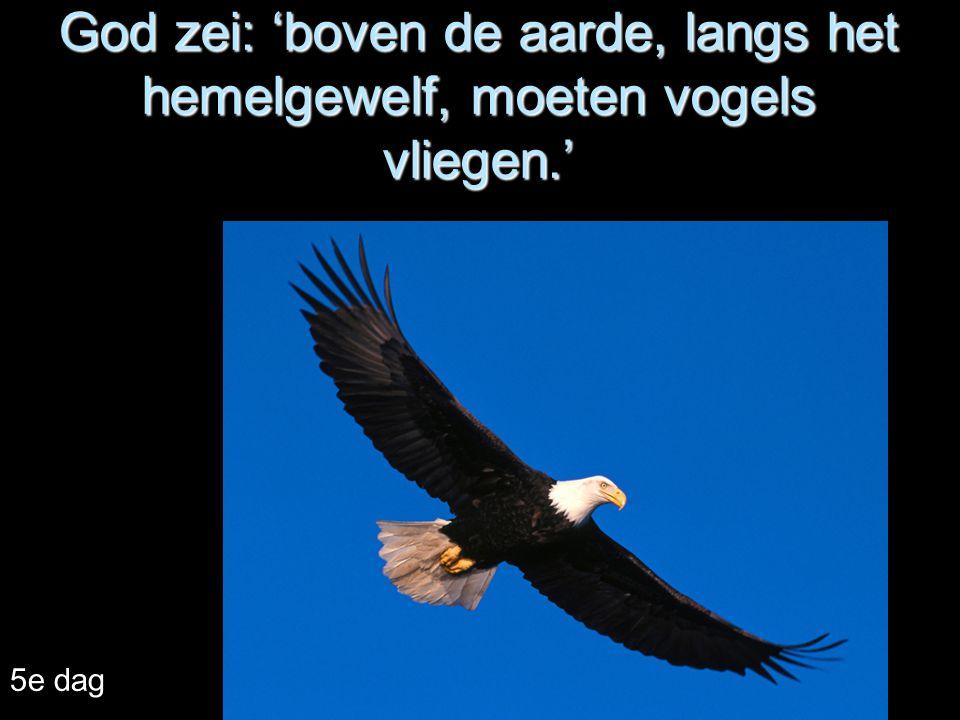 God zei: 'boven de aarde, langs het hemelgewelf, moeten vogels vliegen.' 5e dag