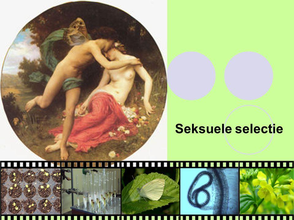 Seksuele selectie bij mensen? Symmetrie